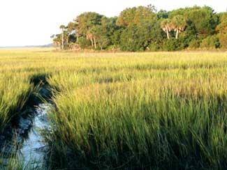 SC ACE Basin Salt Marsh
