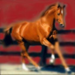 Feng Shui - Horse
